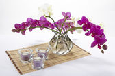 Bouquet of orchids — Stock Photo