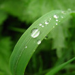 Stock Photo: Dew on green grass