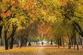 Avenue en automne — Photo