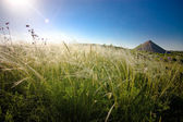 Steppe of feather grass — Stock Photo