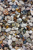 Pebbles and water — Stock Photo