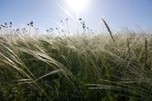 Steppe in Donbass — Stock Photo