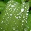 Many dewdrops — Stock Photo