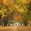 Avenue in autumn — Stock Photo