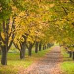 Autumn chestnut alley — Stock Photo #29863641
