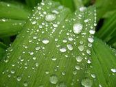 Many dewdrops — Stock Photo