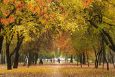 Avenue in autumn — Stock Photo