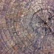 Stock Photo: Cut of old dry tree