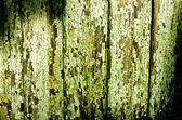 Green cracky texture — Stock Photo