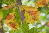 Herbstlaub — Stockfoto