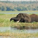 Elephants in Tanzania — Стоковое фото