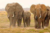 Elephants in Tanzania — Stock fotografie