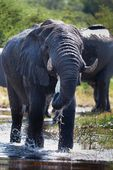 Elephant in national parks of Tanzania — Stock Photo