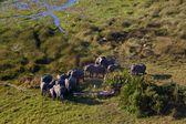 Slon v národních parcích Tanzanie — Stock fotografie
