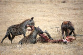 Hyena in the national park in Tanzania — ストック写真