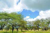 Landschaften von Tansania — Stockfoto