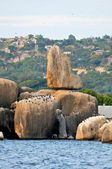 пейзажи танзании — Стоковое фото
