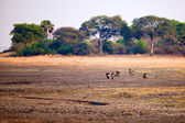 Landscapes of Tanzania — Stock Photo