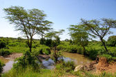 Landscapes of Tanzania — Stockfoto