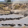 Постер, плакат: Wildbeest migration in serengeti national park