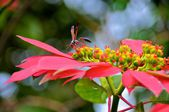 Floral from different parts of tanzania — Stock Photo