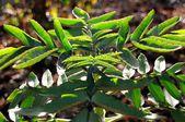 Floral de différentes régions de la tanzanie — Photo