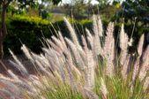 цветочные из разных частей из танзании — Стоковое фото