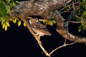 タンザニアの周りから様々 な鳥 — ストック写真