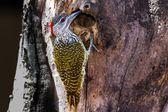Různé ptáky z Tanzanie a okolí — Stock fotografie