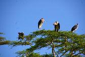 Various birds from around tanzania — Stock Photo