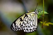 Butterflies found in Tanzania — Stockfoto