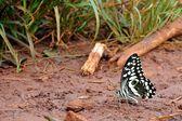 Butterflies found in Tanzania — Zdjęcie stockowe