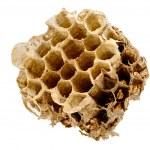 Part of hornets nest — Stock Photo #36824621
