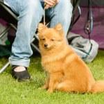 ������, ������: Cute furry dog