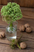Still life with green flowers in a bottle and nuts — Stock Photo