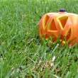 Halloween pumpkin on the grass — Stok fotoğraf