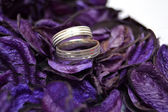Rings on petals — Stock Photo