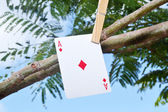 Poker card hanging from the tree — Stock Photo