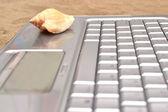 Ноутбук и shell на дереве — Стоковое фото