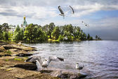 Gulls against the backdrop of the Church of St. Nicholas the Won — Stock Photo