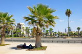 Man sleeps under a Palm tree on Tel Aviv promenade in Israel — Stock Photo