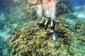 Divers in gear swim under water amid coral reef  — Stock Photo