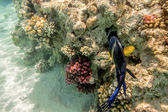 Colorful fish swim on a coral reef in the Red Sea — Stock Photo