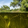 Duck swims in the Lake View under water on the algae and the wat — Stock Photo #49958405