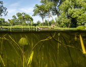 Duck swims in the Lake View under water on the algae and the wat — Stok fotoğraf