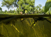 Duck swims in the Lake View under water on the algae and the wat — Stock Photo