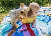 A small child is playing with a dog outdoors on a sunny summer d — Stock Photo