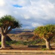 Tropical trees on arid landscape — Stock Photo