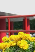 Kwiaty żółte i czerwone poręczy — Zdjęcie stockowe
