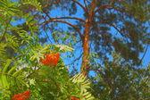 различные деревья — Стоковое фото
